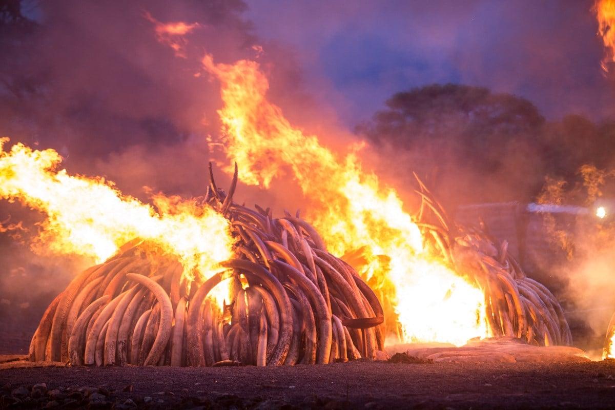 Stock image of a rhino horn burn