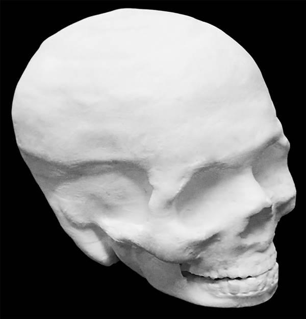 A Hyperelastic Bone human skull. Interior of the skull is hollow Adam E. Jakus, PhD
