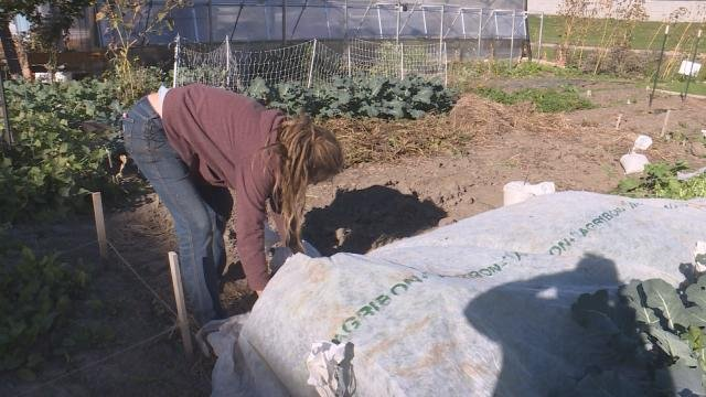Dubuque Rescue Mission Garden Working To Preserve