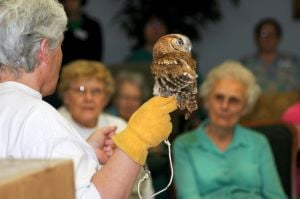Jodeane Cancilla of the Macbride Raptor project shows off a screech owl.