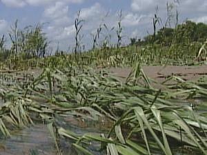 Ron Picray said more than 200 of his 310 acres were flooded