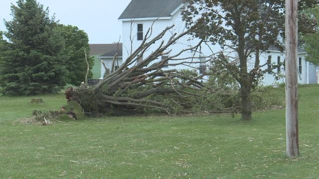 A tree is uprooted just outside of Holy Cross in Dubuque County.