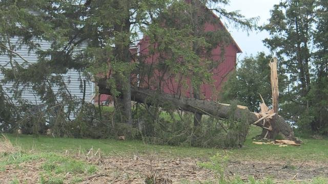 A tree is downed just outside of Holy Cross after Wednesday night's storms.