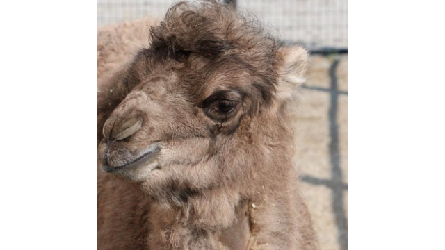 Blank Park Zoo Calendar : Blank park zoo in des moines sees spate of recent births