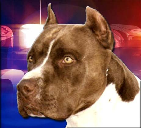 Man shoots pit bull that was attacking wife, dog