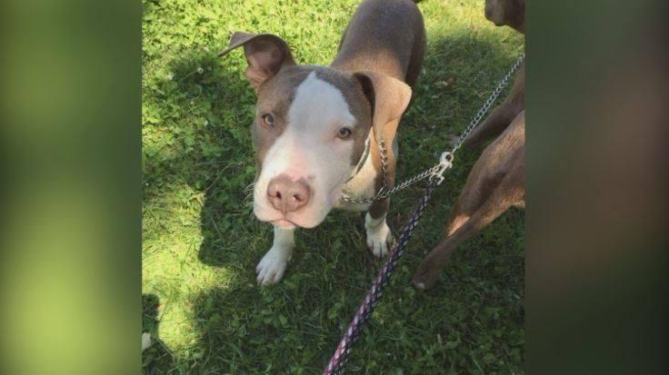 Woman finds stolen puppy by luck - KWWL - Eastern Iowa Breaking News, Weather, Closings
