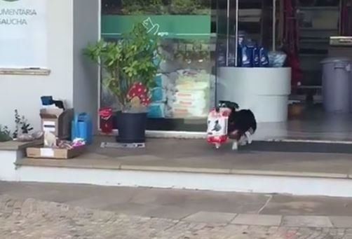 Every Day This Dog Goes Shopping By Himself Returns With Treats - Every day this dog goes shopping all by himself to get treats