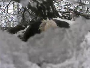 Eagle Webcam partially covered by snow April 19, 2011