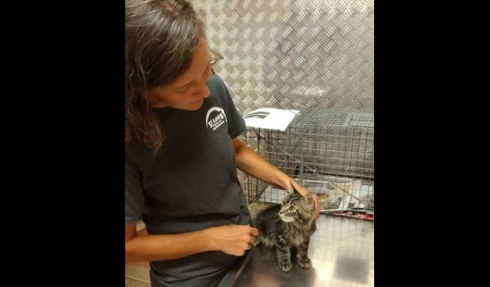 St. Louis Feral Cat Outreach