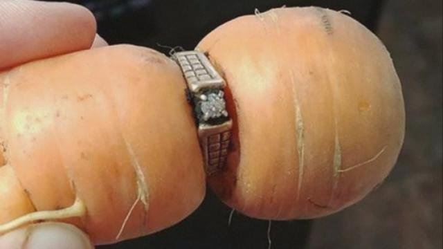 Woman finds lost ring on a carrot 13 years later