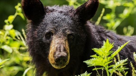 Black Bear photo date: 7/20/2014