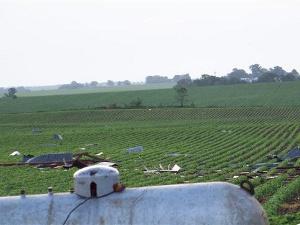 Photo taken about 4 miles west of Aplington at the Abbas farm