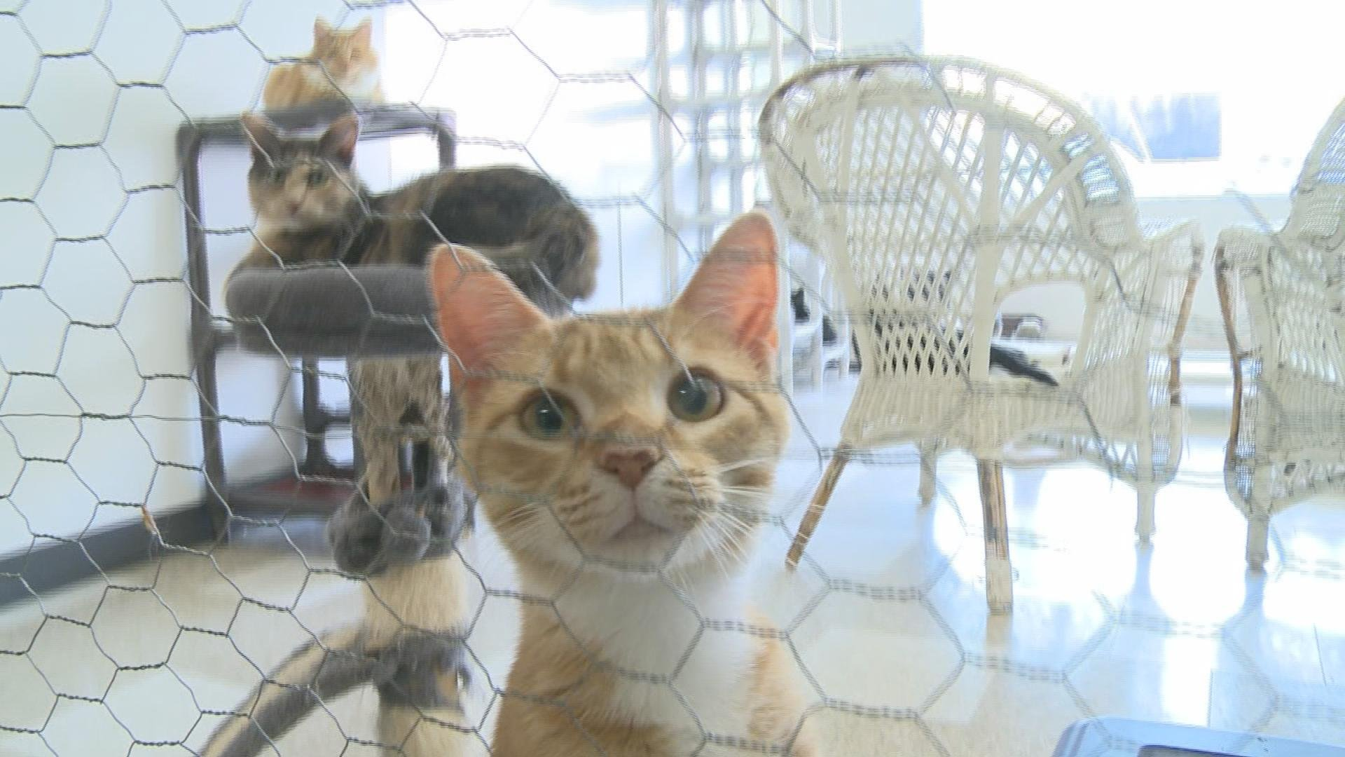 Animal rescue shelter in Dubuque County to close KTTC Rochester