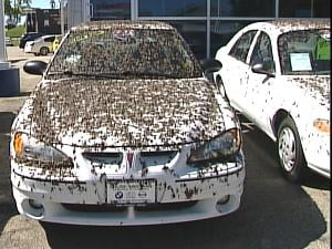 A car at the Dubuque Auto Outlet covered in dead mayflies Monday  morning