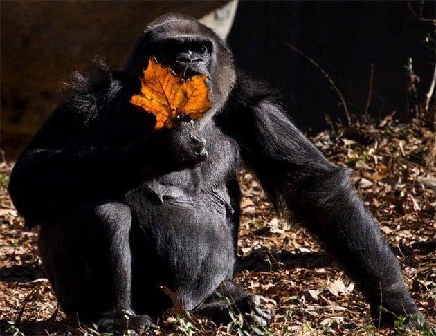 Source: Zoo Atlanta