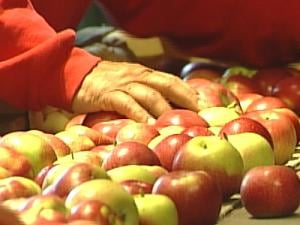 Dick Czipar sorts through apples at his orchard