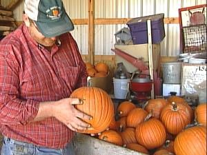 Pumpkin grower Mike Spoerl examines pumpkins he had to buy from neighbors to supplement his supply