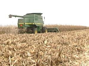 Friends and family members helped harvest 200 acres of the Brunscheens' corn
