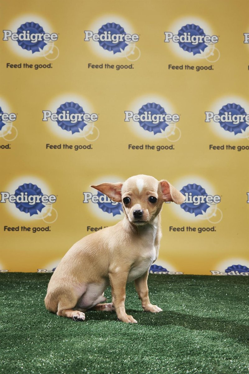 Three adorable Iowa puppies will take to the gridiron in the starting line-up for Animal Planet's Puppy Bowl XIV.
