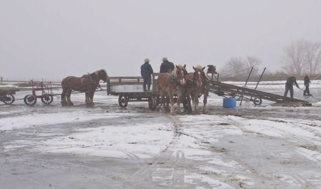 Amish Community Invites Waterloo Photographer To Take Ice