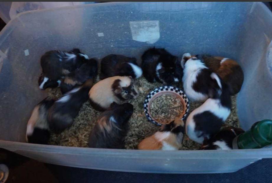 Animal Control finds 107 animals inside Waterloo home - KWWL - Eastern Iowa Breaking News, Weather, Closings