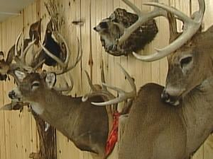 Tom's Taxidermy is busiest during deer hunting season