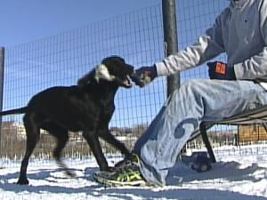 Animal experts recommend wiping off a dog's feet after it comes inside. Snow and salt can hurt the animal's paws.