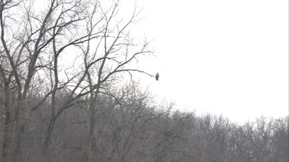Eagle Watch - KWWL - Eastern Iowa Breaking News, Weather, Closings