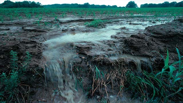 According to Megan Murphy from the Cedar Rapids Solid Waste and Recycling Division, the rainy spring has washed nitrogen fertilizer from the soil into rivers, causing the nitrate levels to go up.