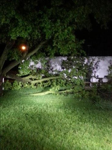 A tree that fell onto a house during the storm that blew through Dike, sent in by Grundy County Emergency Management Coordinator Chris Heerkes.
