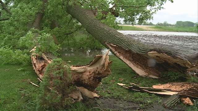 The Schippers lost more than 20 trees in Wednesday's storm.