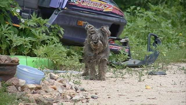 Neighbors have complained about the treatment of this dog and others on property near Fredericksburg.  The dog was reported stolen Saturday.