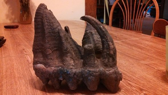Professors at Upper Iowa University believe the tooth belonged to a mastodon more than 20,000 years ago.