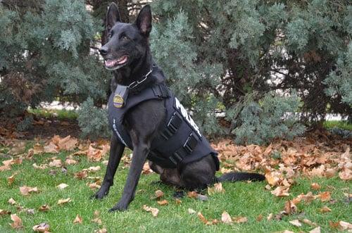 K9 Officer Robby
