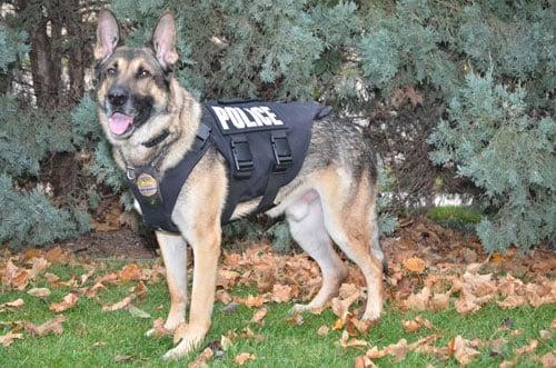 K9 Officer Mitch