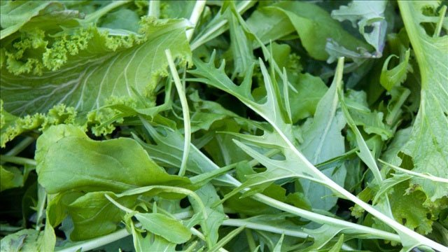 Iowa city backyard abundance plant sale to take place in - Vegetable garden what to plant in april ...