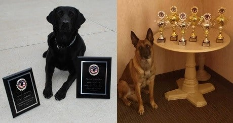 Dubuque police K9s Tiffany (left) and Brix