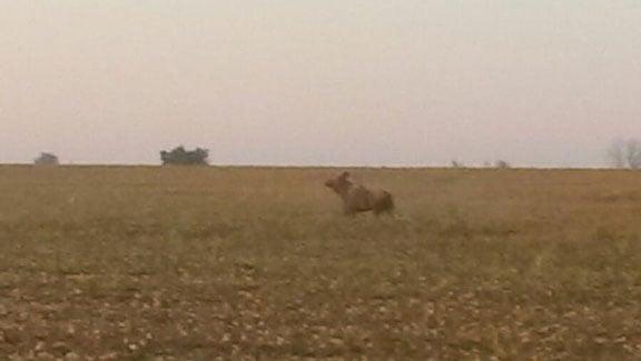 Taken Thursday morning south of Sumner by Eric Jones. (Courtesy KWWL viewer Wendy Jones)