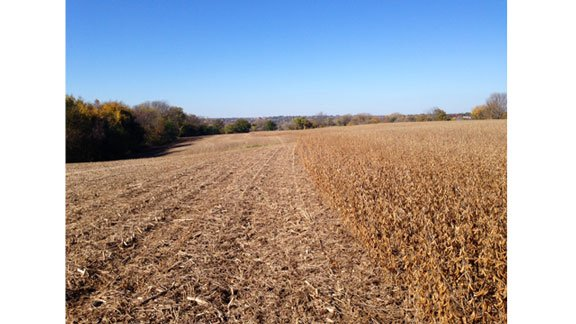 Matthew Schuster realized over the weekend that someone stole 18 acres of soybeans from his field.