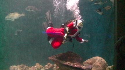 Santa takes a dip at the National Mississippi River Museum and Aquarium