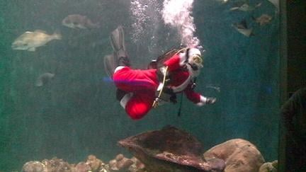Santa takes a dip at the National Mississippi River Museum and Aquarium