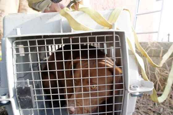The dog rescued from a well in Fayette County on Wednesday, Dec. 17.