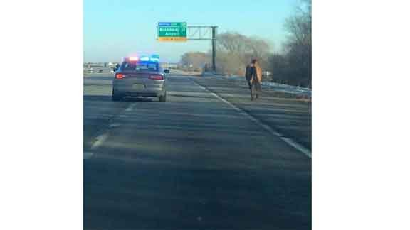 The wayward U.S. Hwy. 218 horse is pulled over by an Iowa State Patrol trooper. (Photo courtesy KWWL viewer Chris, from Twitter)