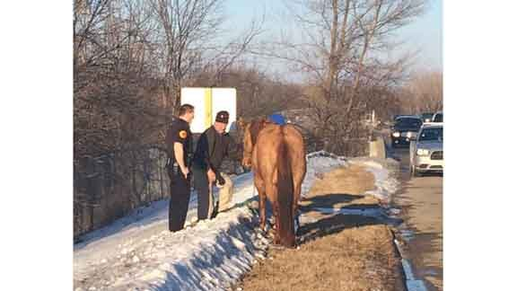 The Hwy. 218 horse is caught. (Michael Crowe, KWWL)