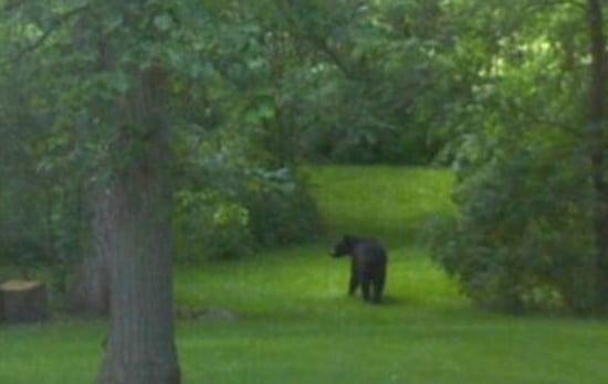 Black bear photo taken by Jennifer Delagardelle south of Jesup.