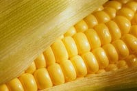 Iowa sweet corn festival in Waterloo August 8