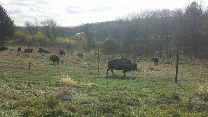 Worker bison come to la porte city kwwl eastern iowa for La porte tx breaking news