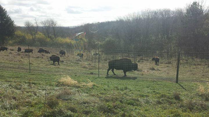 Worker bison come to la porte city kwwl eastern iowa for La porte tx breaking news