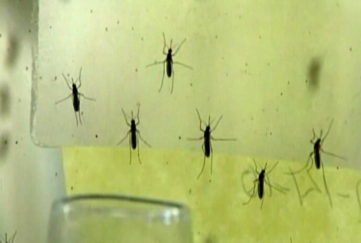 Mosquito Surveillance Program underway in Johnson County - KWWL - Eastern Iowa Breaking News, Weather, Closings Mosquito Surveillance Program underway in Johnson County - 웹