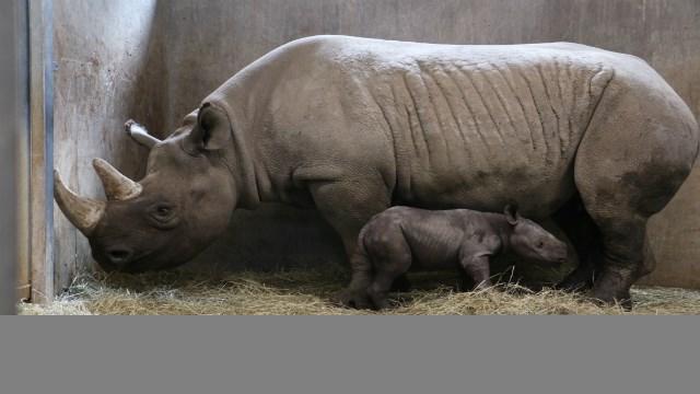 Courtesy: Blank Park Zoo